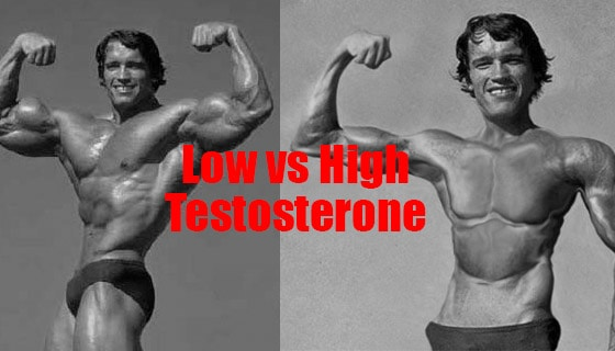 What is TestoGen? – Answered