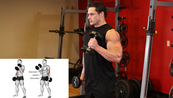 Hammer-Curl-Isolation-Exercise
