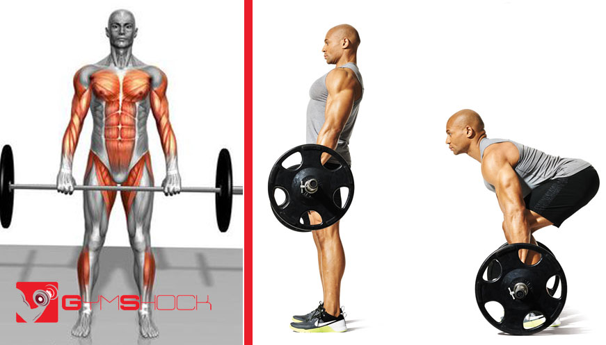Why-is-the-deadlift-so-good