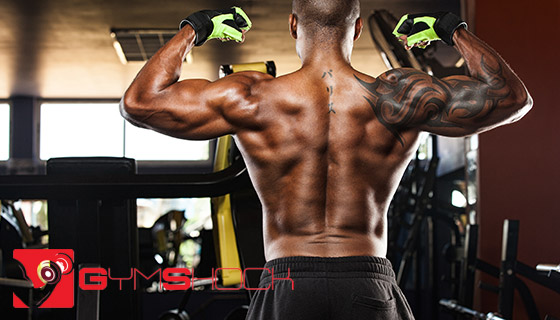 Back muscles build up